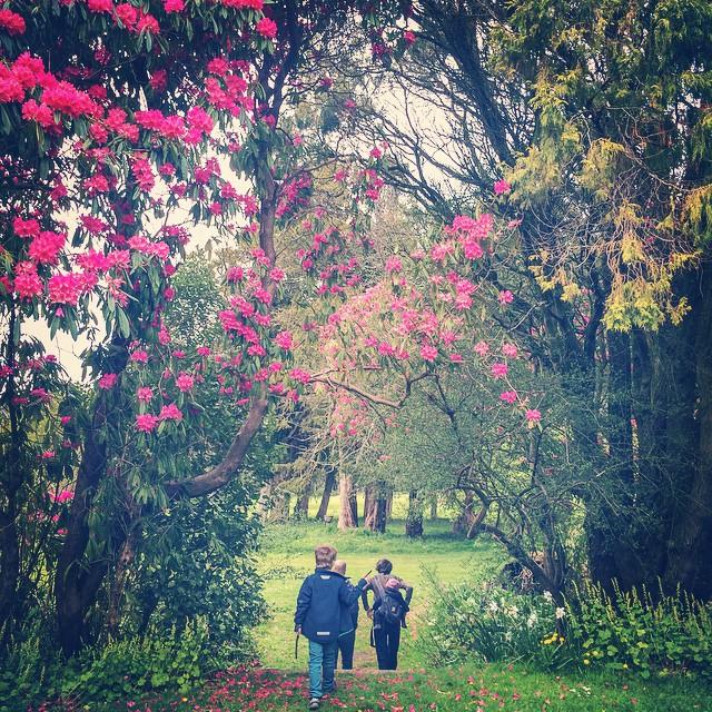 Rhododendron jungle
